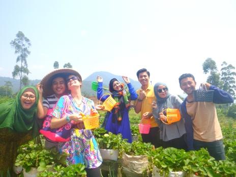 Indonesiastrawberrry